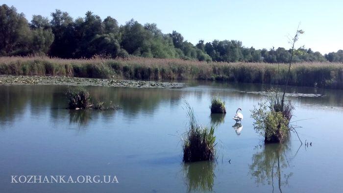 Кожанка річка літо 2017